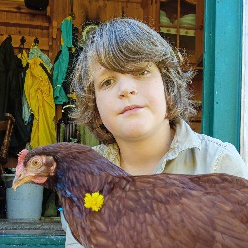 Bild zum Weblog Hühnerliebe